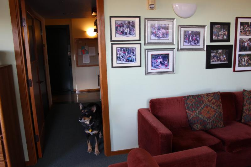 A communal living space at Jackson Place Cohousing in Seattle's South End, featuring Wolf, the part-blue heeler.