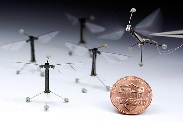 Several RoboBees sit on the ground next to a penny, while another is held in tweezers with the wings activated.
