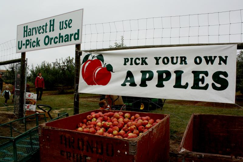 U-pick isn't a very practical solution to the problem of harvesting labor shortage.