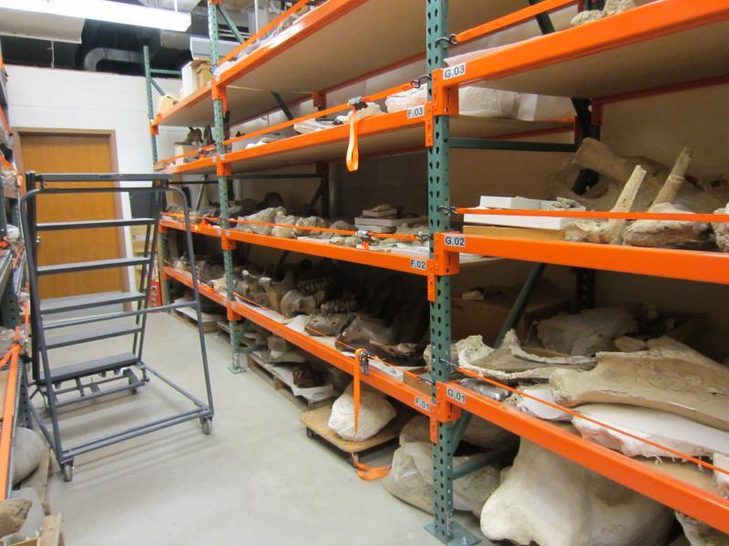 Mammoth and mastadon bones in Burke Museum storage.