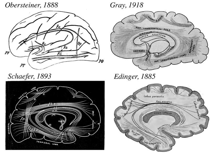 A montage of diagrams of this part of the brain.
