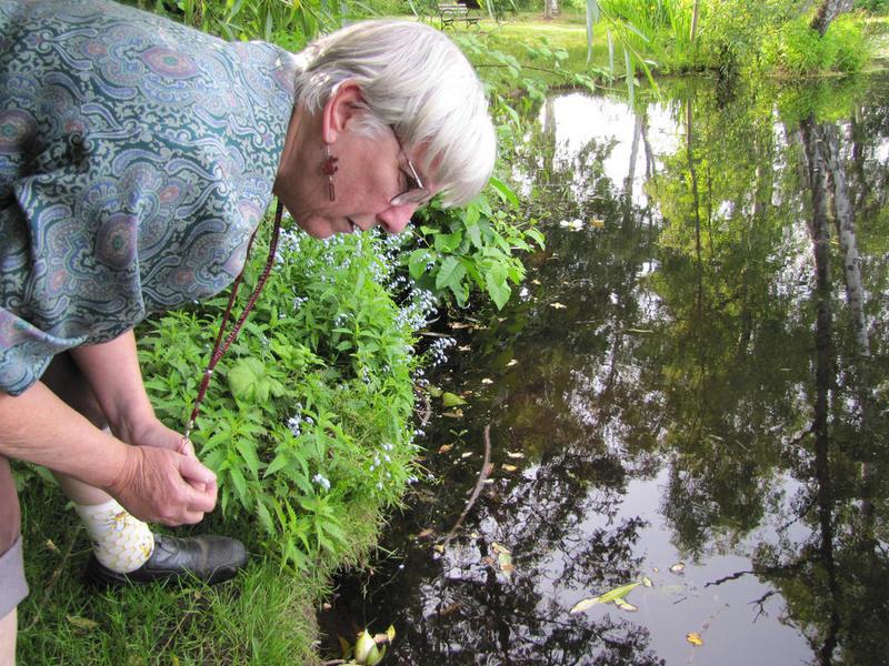 Sharon Collman, an entomologist at Washington State University, hunts for mosquitos.