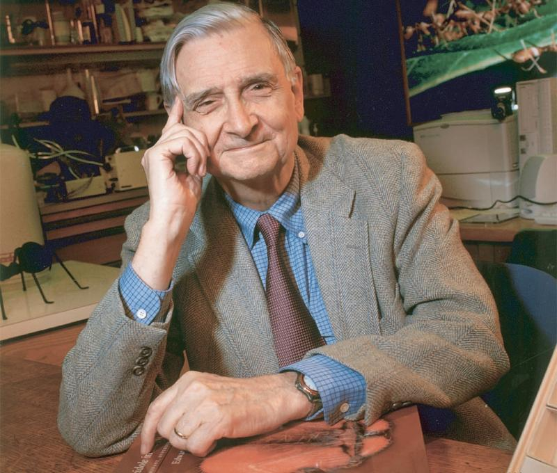 E.O. Wilson says that if there is extraterrestrial life, they've probably already achieved the scientific knowledge we have on Earth.