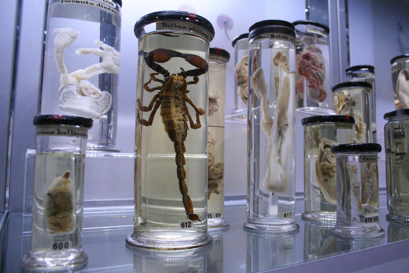 Conjoined skulls? The digestive tract of a jellyfish? Museums can feature some weird displays.