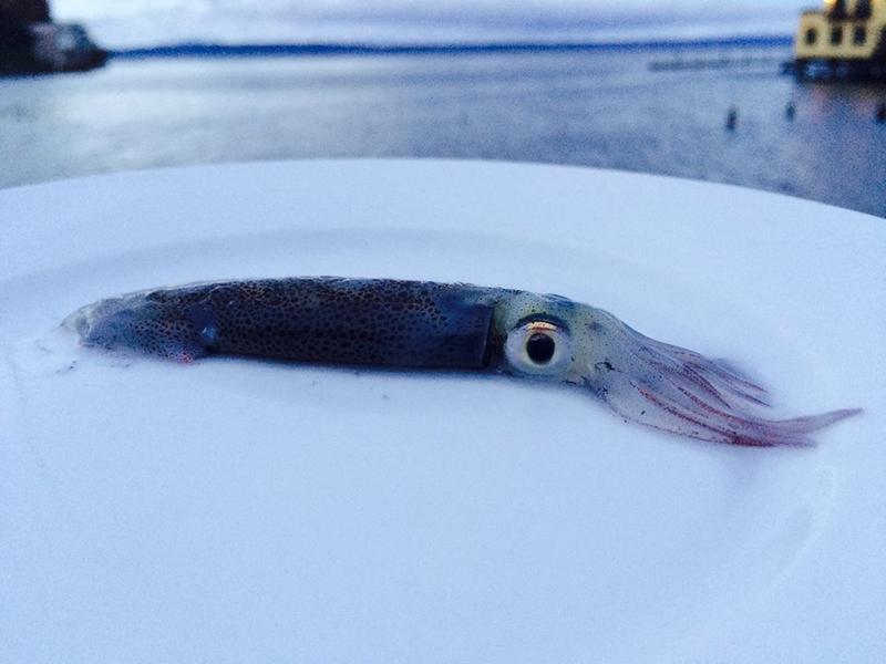 KUOW's David Hyde caught this little beauty while jigging in Puget Sound.