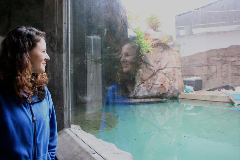 Seattle Aquarium veterinarian Lesanna Lahner and sea otter pup Mishka.
