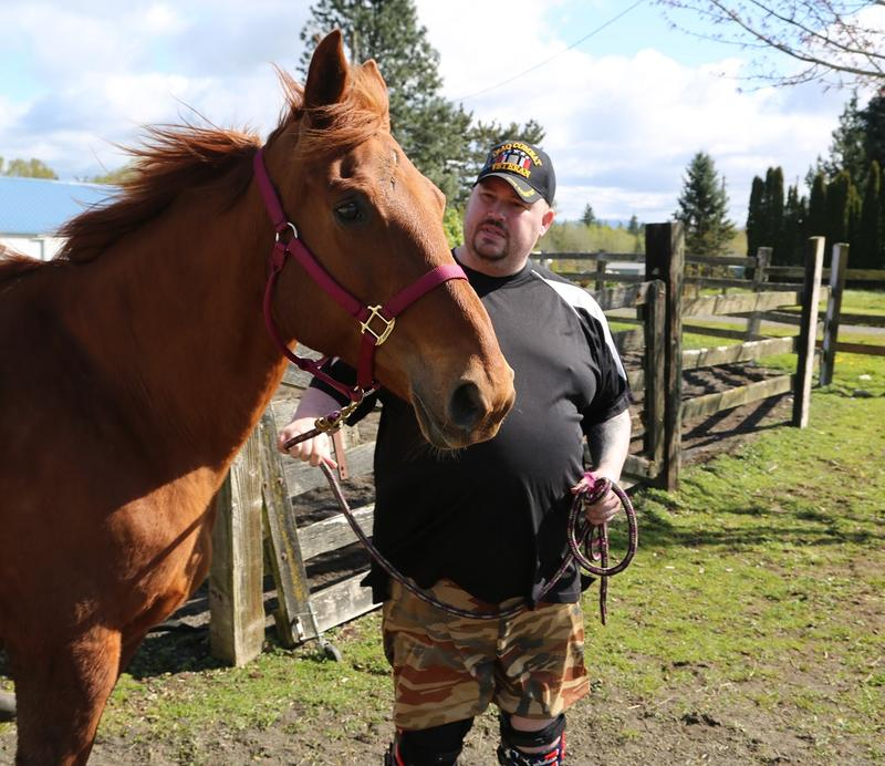 Veteran Richard Dykstra leads Abby in a corral for equine therapy as part of the Animals as Natural Therapy program north of Bellingham, Wash.