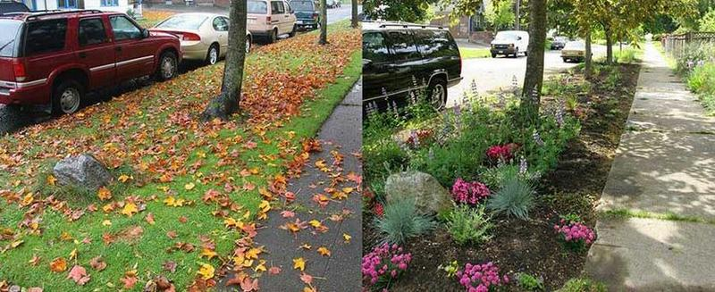 An example of Seattle's Pollinator Pathway.