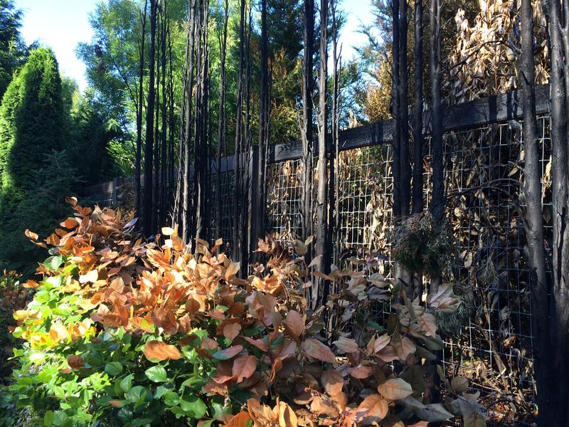 A fence, cedars and salal were burned at a property in Woodway, Washington.  A sign on the property says fireworks were the cause.