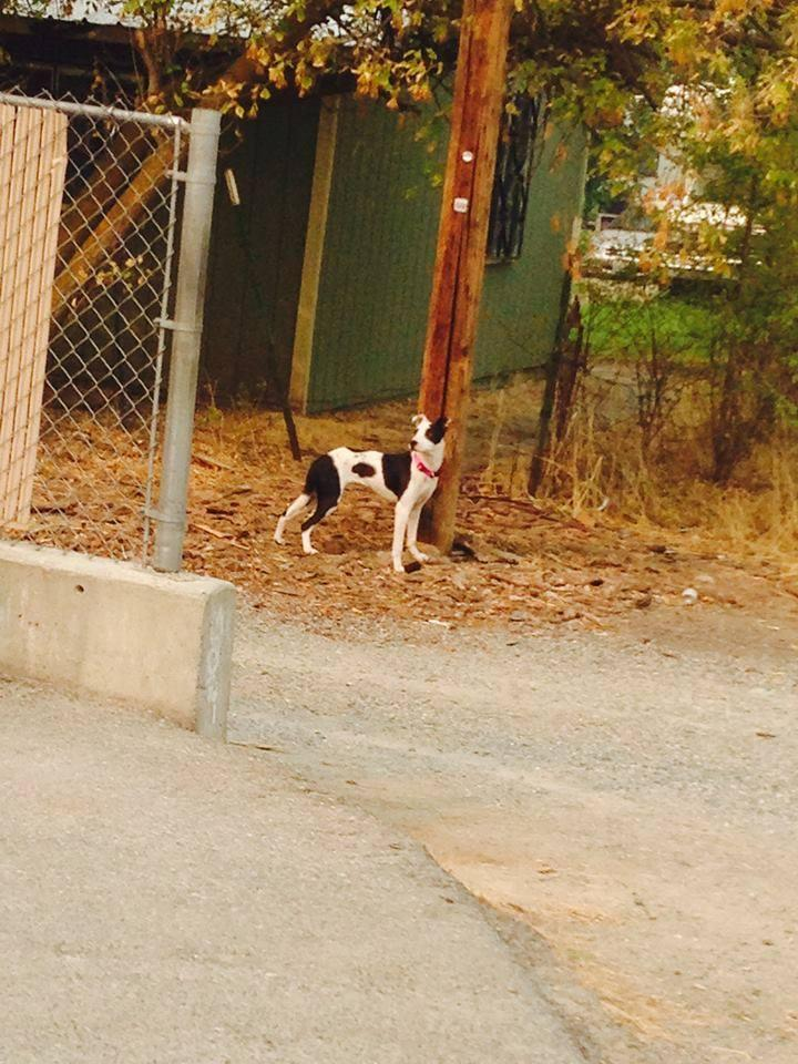 This dog was spotted by the Jackpot on the east side of Omak.