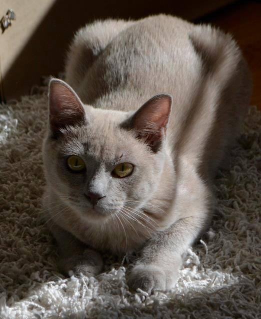 A cat named Ella has been missing for a week. Her owner says that she hides a lot but is friendly. If you see her, comment on this Facebook post: http://on.fb.me/1KnshZV