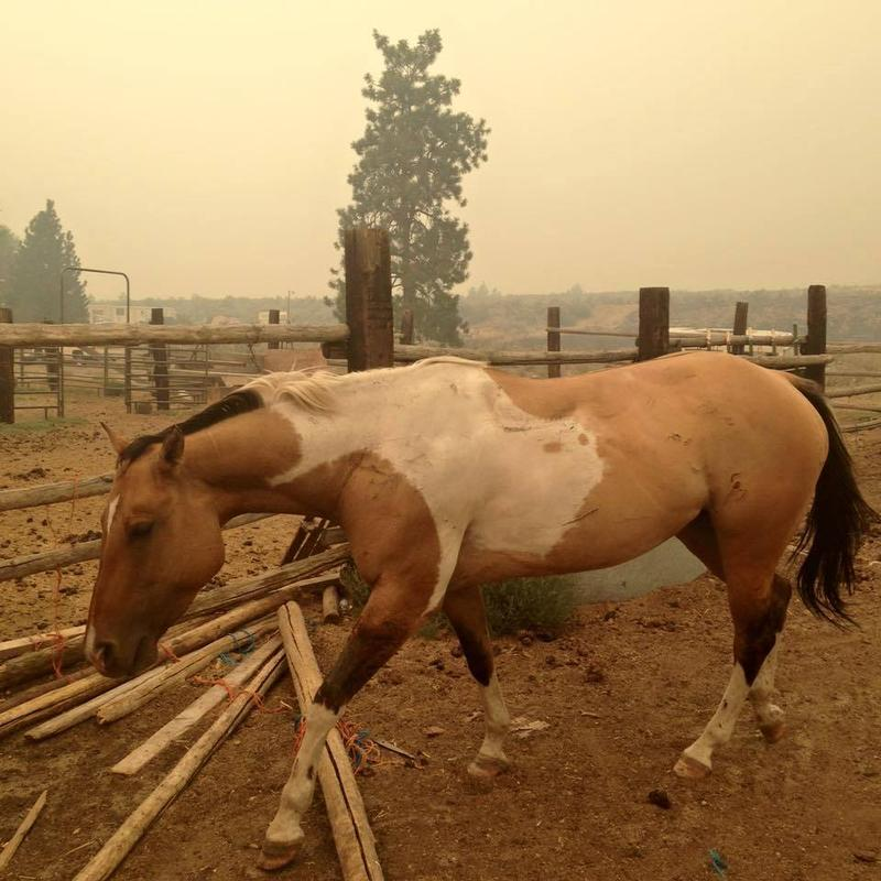 This horse went missing during the wildfires and was recently reunited with its owner.