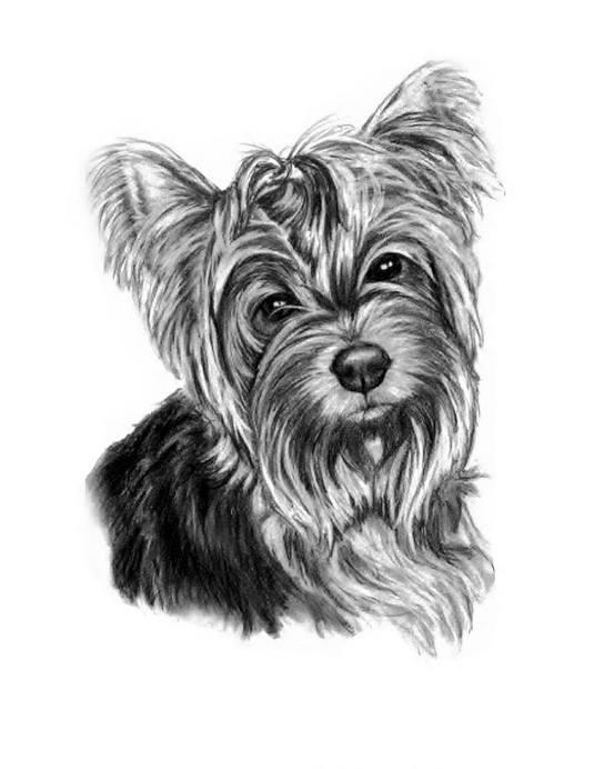 Lost Yorkie on Okoma Drive near Ace Hardware. Owner Jaimee asks for his return: (206) 235-2552.