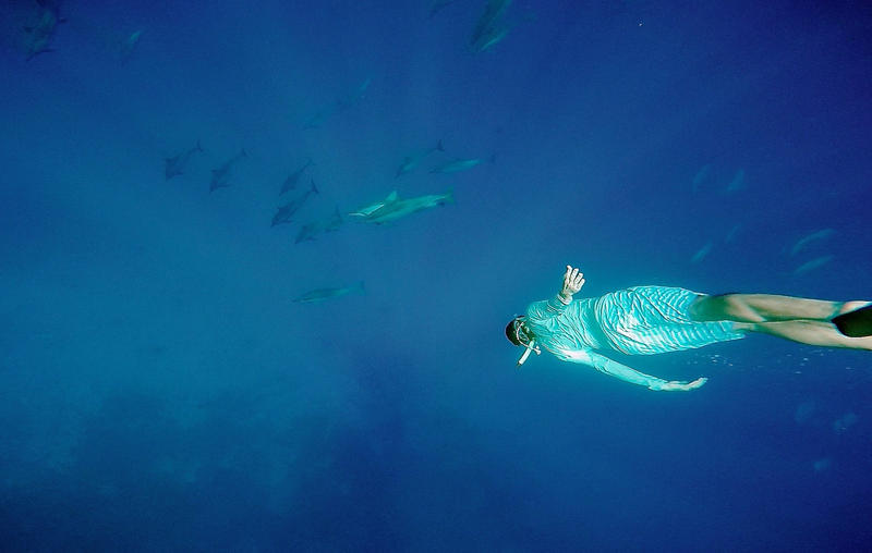 File photo: diver swimming with dolphins
