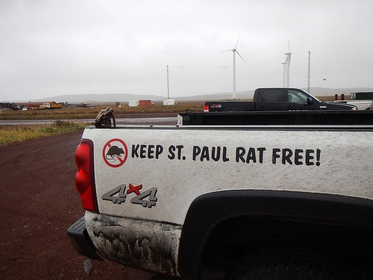 On St. Paul Island in Alaska's Pribilofs, this is no empty slogan. The health of the islands' bird populations might depend on keeping rats away.