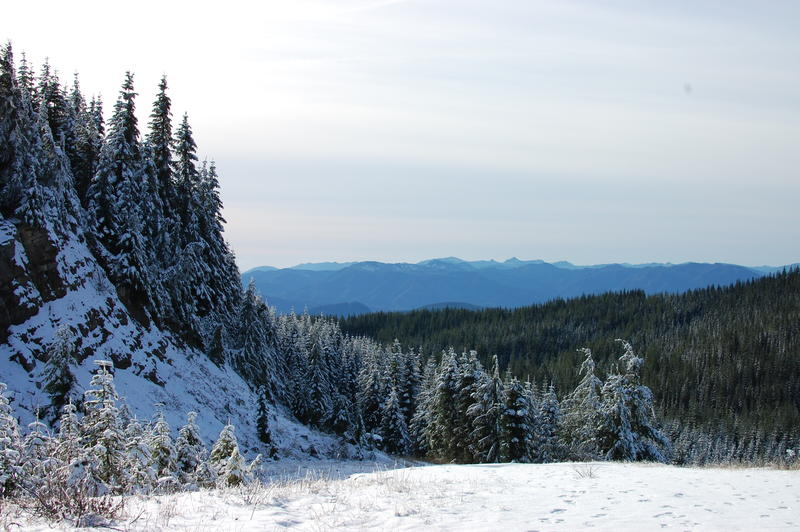 The Nisqually Carbon Project protects a mix of younger and older forests near Mount Rainier and the carbon they hold in their roots and branches.
