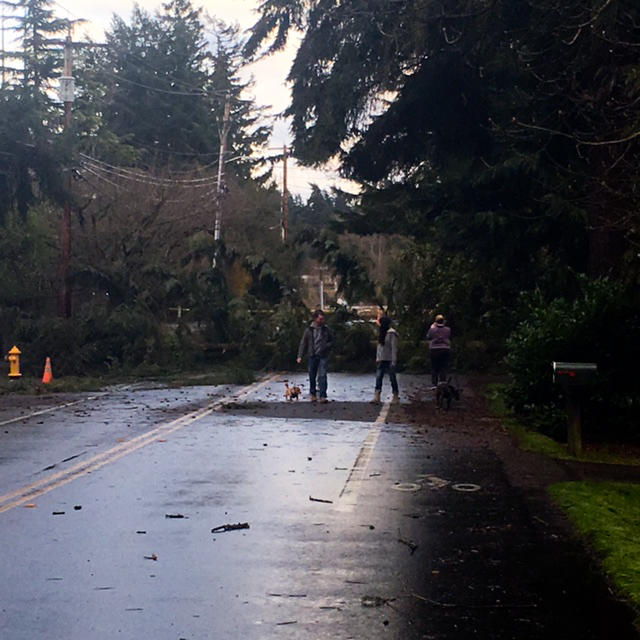 A tree fell on Sunday, March 14, 2016 on 112th Street Northeast, east of Forbes Creek Drive in Kirkland.