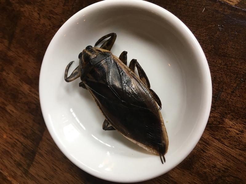 This winged water beetle at Nue on Capitol Hill tasted like a salt lick chased by an apple Jolly Rancher. Click through for images of reporter Ruby de Luna tasting the water beetle (which isn't on the menu, by the way.)