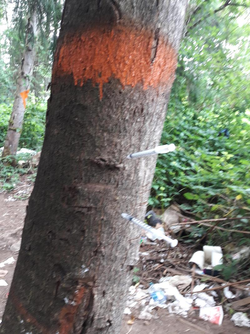 An abandoned homeless encampment with needles stuck in a tree.
