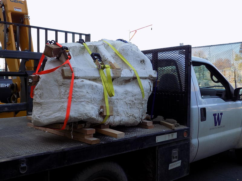 The Tyrannosaurus Rex skull arrives at the Burke Museum in Seattle.