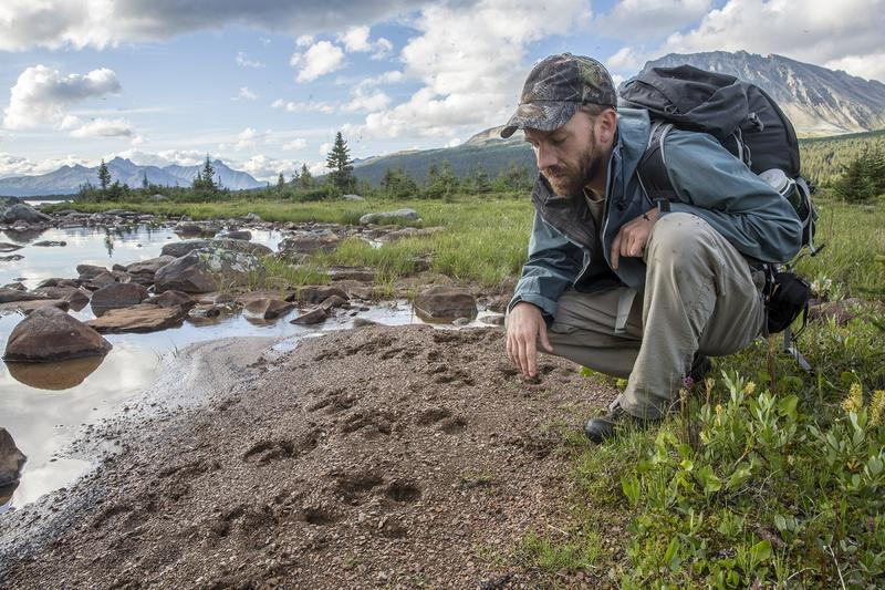 Marcus Reynerson inspecting mountain Caribou tracks