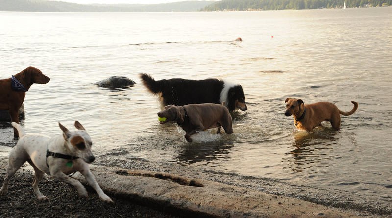 The only dog park with a beach in Seattle is at Magnuson Park in northeast Seattle.
