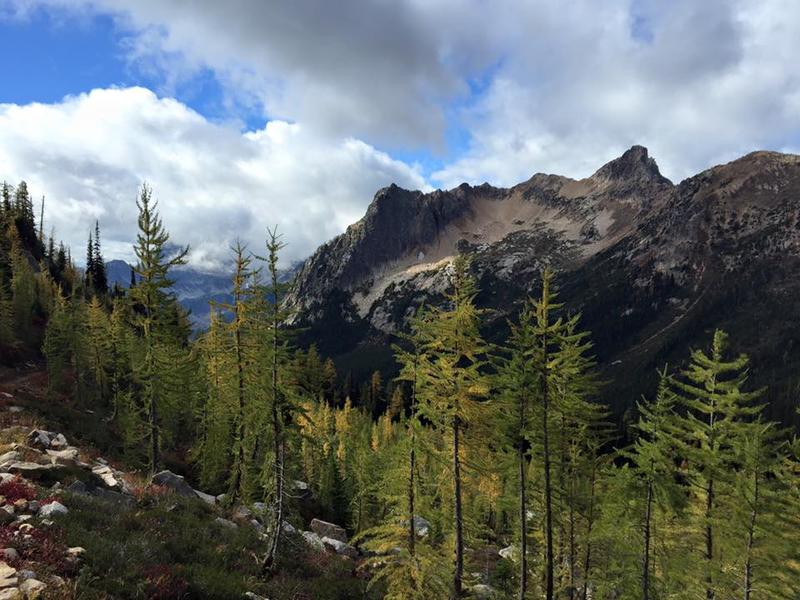 Larches, a staple of the North Cascades, are shown on the Pacifc Crest Trail near Cutthroat Pass.