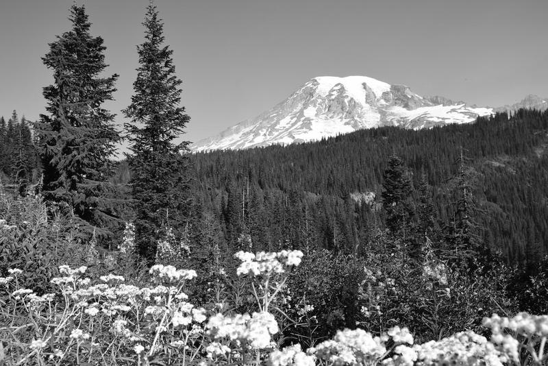 Mount Rainier National Park.