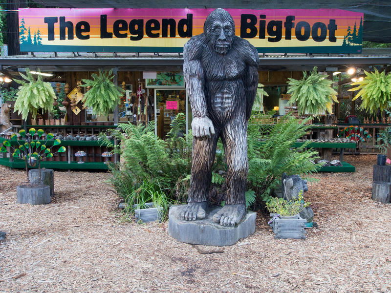 'The Legend of Bigfoot' is a store along Highway 101 in northern California.