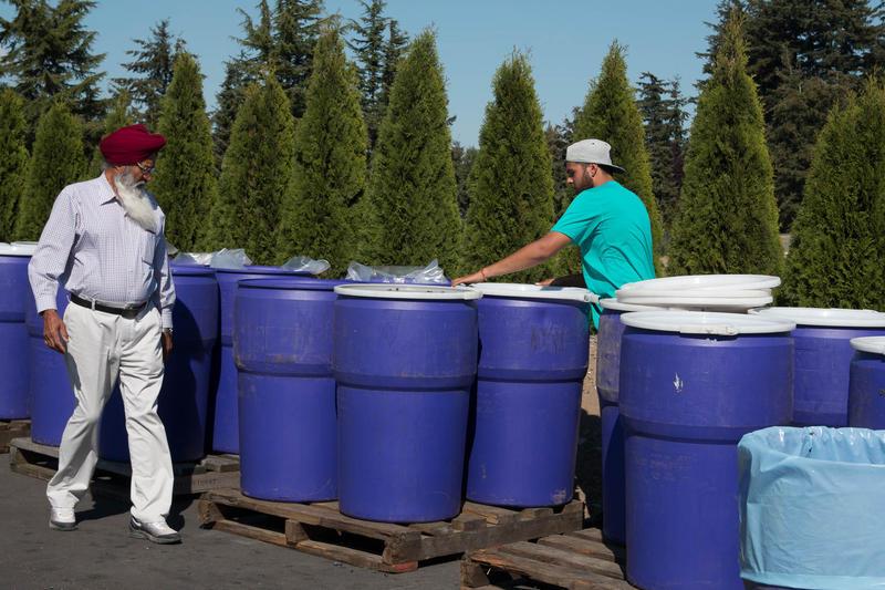 Mohinder Sangha, left, helps out on his son Paul Sangha's blueberry farm.