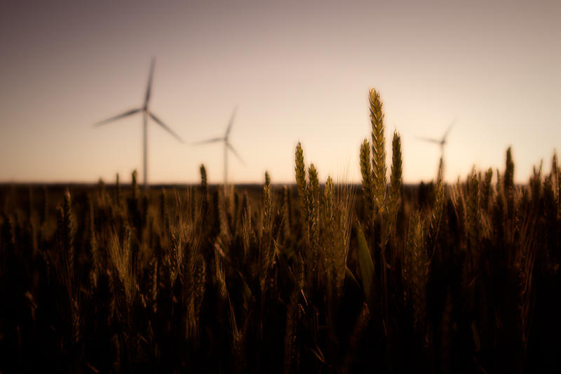 Wind turbines and wheat in Palouse Washington