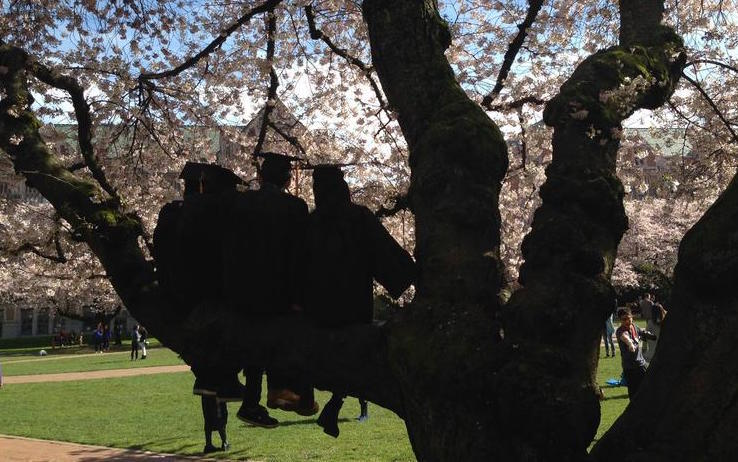 University of Washington students in caps and gowns and cherry blossoms.