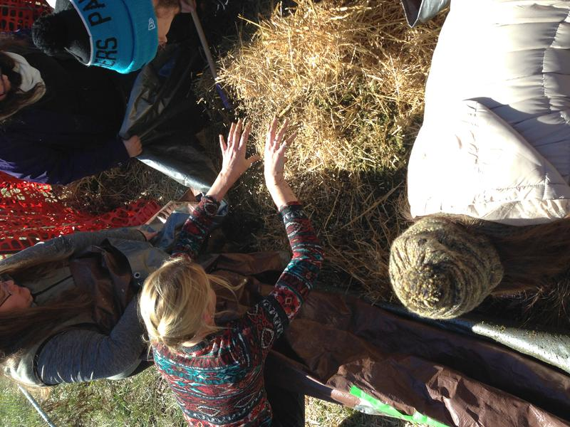 The team mixes together corn, alfalfa pellets, straw and other 'microbe food' before preparing the pile for the body.