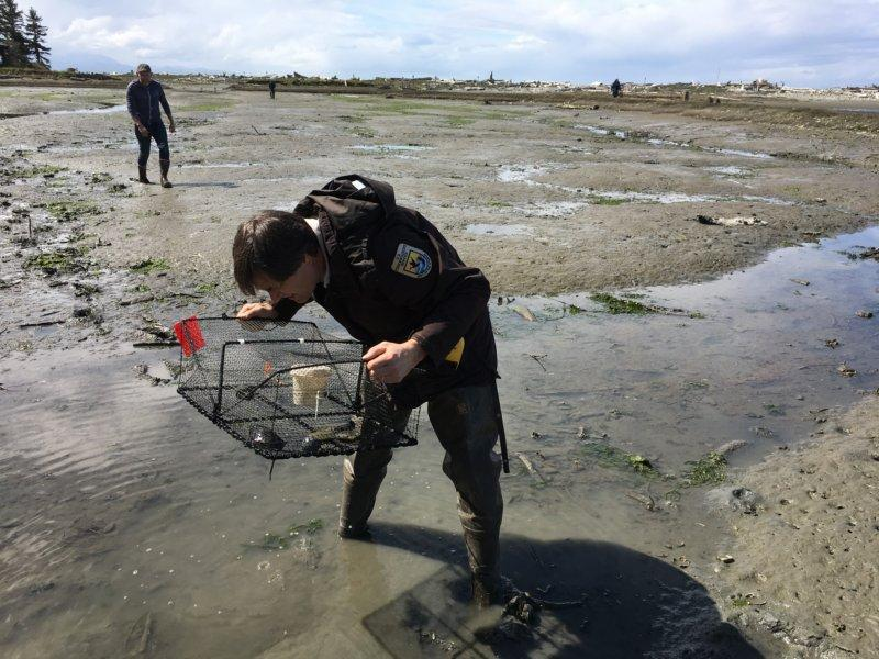 University of Washington researcher Sean McDonald and Lorenz Sollmann with Washington National Wildlife Refuge Complex  check traps at Dungeness Spit