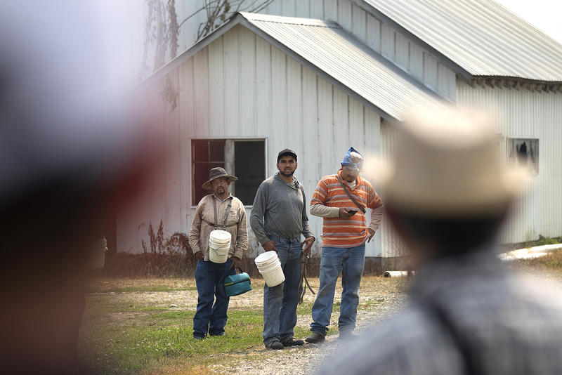 Workers at Sarbanand Farms, center, communicate with their friends and former coworkers who were fired for insubordination last week after protesting their work conditions.