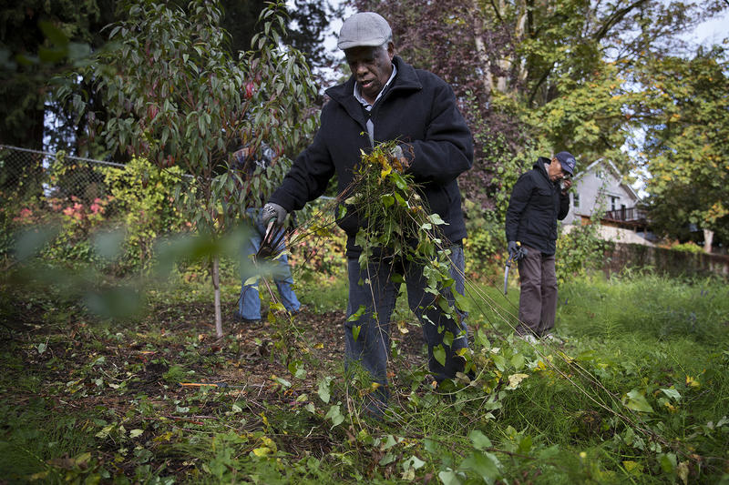 Berhane Ghidey works on Friday, October 13, 2017, at the Rainier Beach Urban Farm and Wetlands, in Seattle.