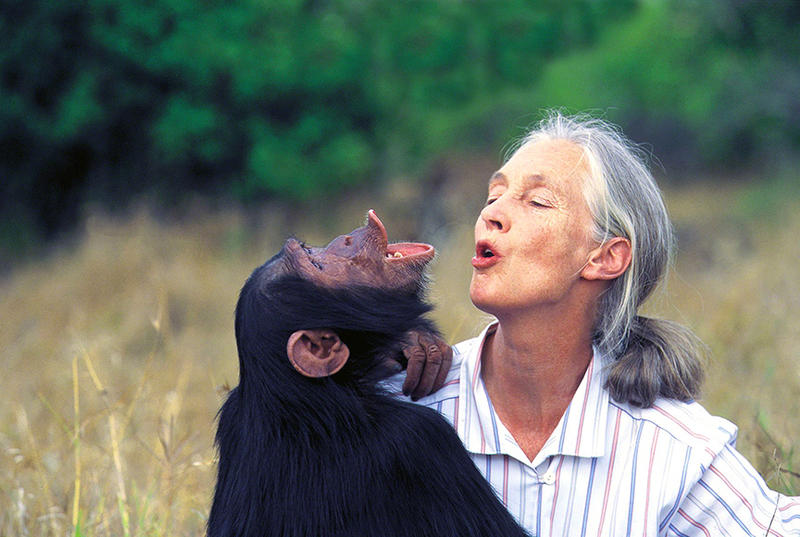 Dr. Jane Goodall pant-hoots with a friend