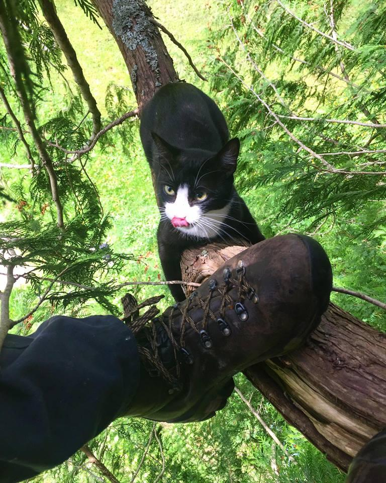 Treetop cat rescue. Facebook Photo/Canopy Cat Rescue. & So your cat is stuck in a tree u2014 again. Hereu0027s what to do | KUOW ...
