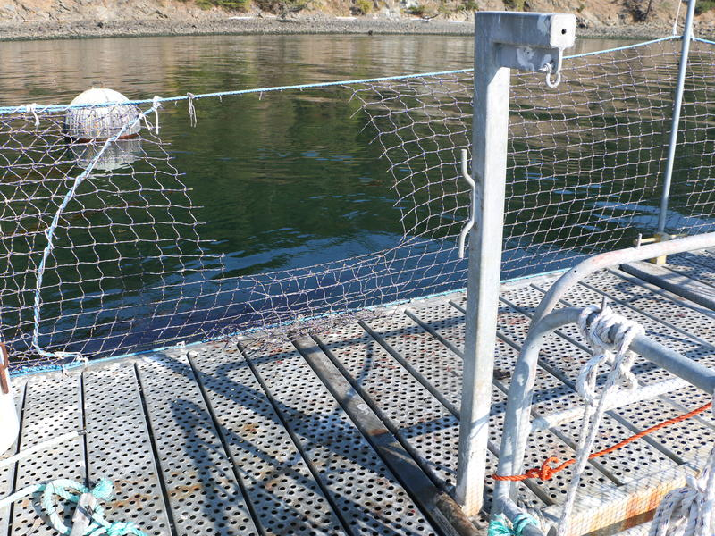 Fish blood-spattered walkway and cut netting where stolen Atlantic salmon were hoisted onto a getaway boat