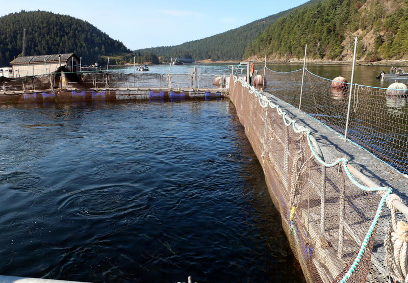 One of the net-pens where Atlantic salmon were stolen