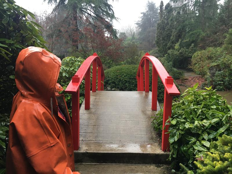 Gardener Marcia High of Seattle's Kubota Garden overlooks the landscape in front of Moon Bridge.