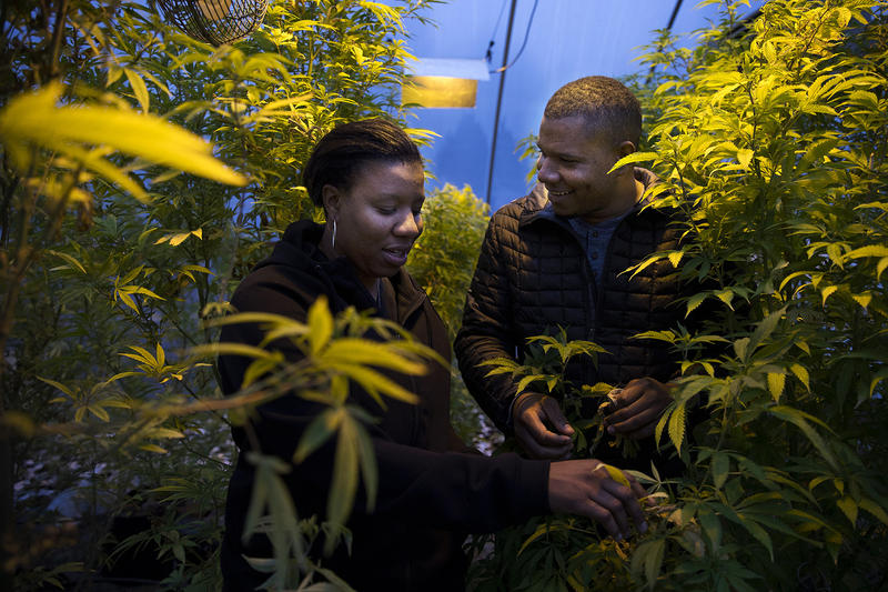 Joy Hollingsworth, left, and Raft Hollingsworth III stand in their cloning greenhouse on Thursday, January 18, 2018, at The Hollingsworth Cannabis Company in Mason County.