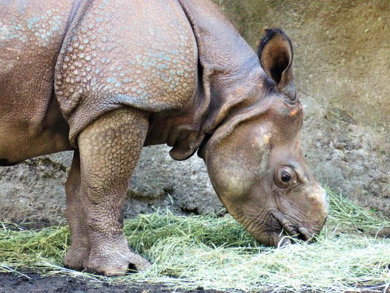 Taj was born at the San Diego Safari Park and moved to Seattle in April 2018