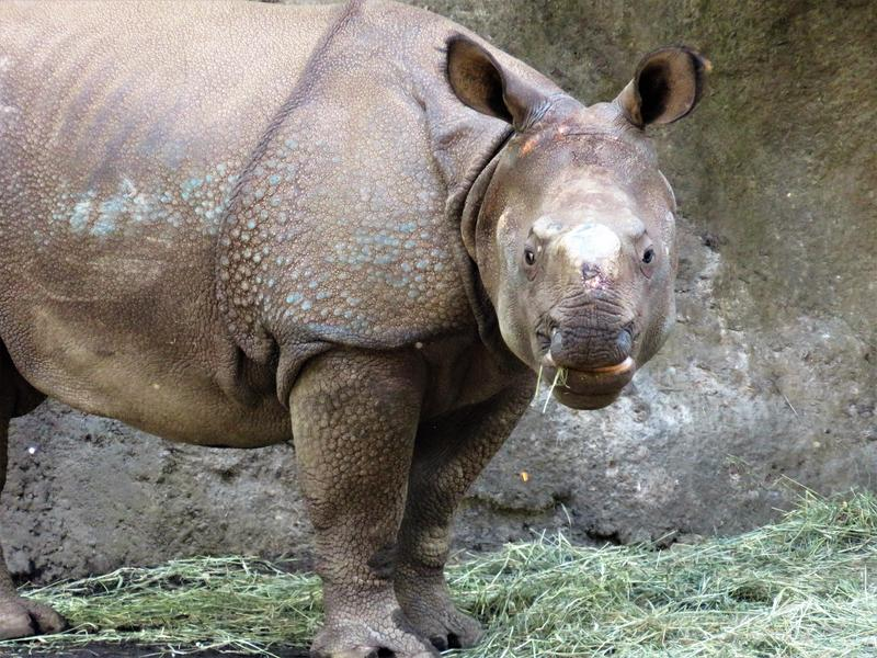 Martin Ramirez says the Woodland Park Zoo is planning to allow visitors to touch the two rhinos.