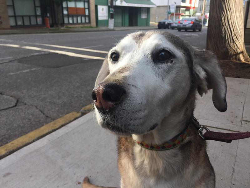Henry lives in Belltown, where he likes to cuddle, go for walks, and poop.