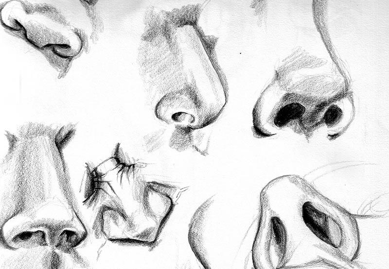 Scents and sensibility. Noses illustration.