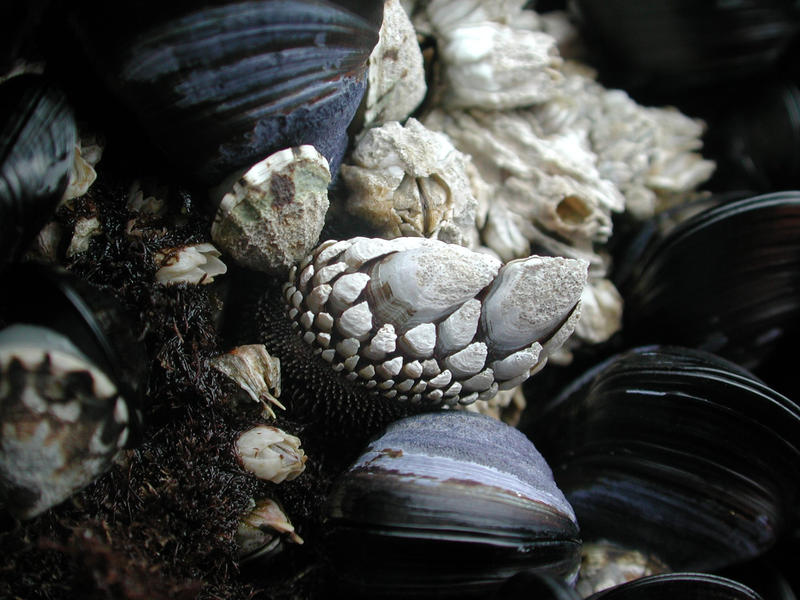 A clutch of barnacles waits to allure you this summer.