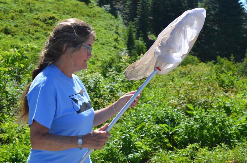 Regina Royan launched a volunteer butterfly count in the North Cascades and at Mt Rainier.
