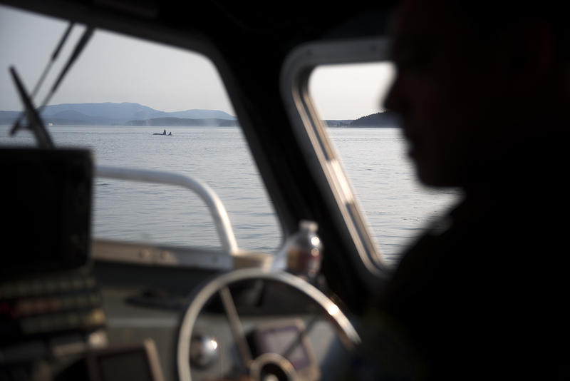 Lummi Nation NRO officer Aaron Hillaire operates the boat while looking for J50, as a group of transient whales are shown in the distance, on Friday, August 10, 2018. (Image taken under the authority of NMFS MMPA/ESA Permit No. 18786-03)