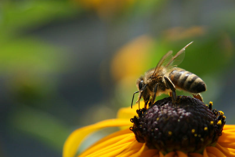 File photo: Bee